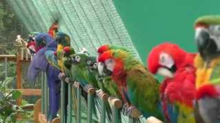 Shuka Vana ~ Rehabilitation Centre for Birds full download video download mp3 download music download