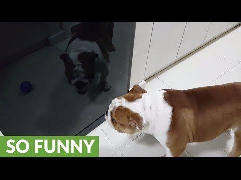 il-cane-che-abbaia-alla-pallina-nello-specchio