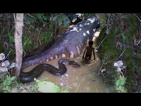 Los 10 Animales más Letales del Amazonas