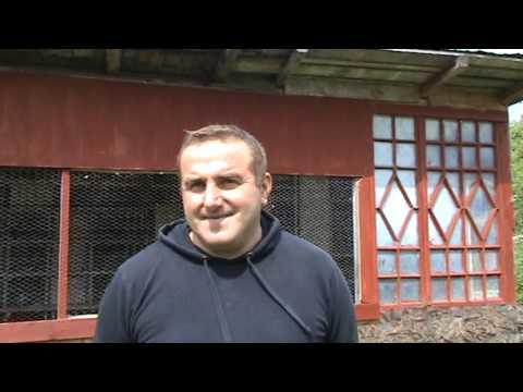 Video Interviu columbofil dl Comanescu Sebastian FCPR Prahova Romania 8 mai 2016 download in MP3, 3GP, MP4, WEBM, AVI, FLV January 2017