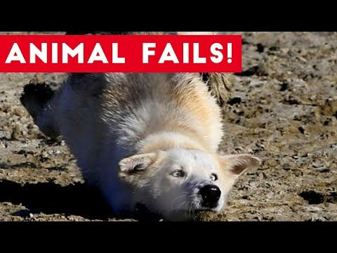 Funniest Animal Fails August 2017 Compilation | Funny Pet Videos (видео)