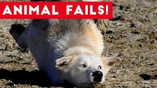 Funniest Animal Fails August 2017 Compilation   Funny Pet Videos