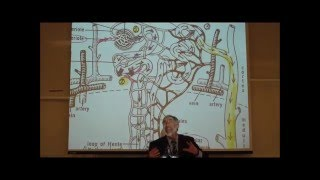 PHARMACOKINETICS; Metabolism&Excretion By Professor Fink