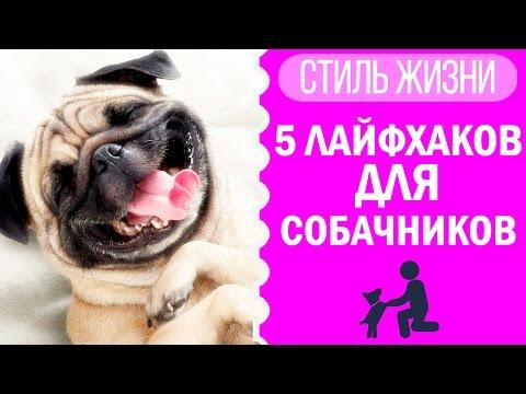 5 лайфхаков для владельцев собак | Догмама Лайфхаки