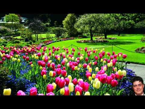Jorge Paladino - Cancion conocida como Aquel lindo jardin, pero el verdadero nombre es: Aquel lindo amor de Don Jorge Paladino de Chinandega Nicaragua a petición del amigo Da...
