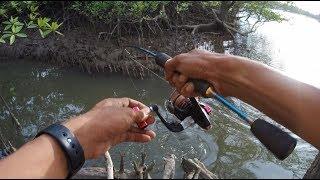 Video Mancing Ikan Barramundi di sungai MP3, 3GP, MP4, WEBM, AVI, FLV Januari 2019