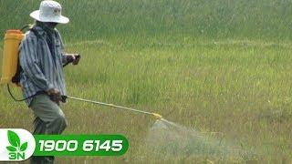 Nông nghiệp | Việt Nam đã sử dụng 3,2 triệu tấn thuốc trừ cỏ trong 10 năm qua