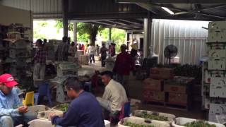 Homestead (FL) United States  city photos gallery : Vietnamese Logan farm Homestead Fl