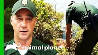 Investigating The Mysterious Death Of An Adult Deer | North Woods Law by Animal Planet