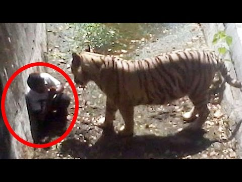 Video 5 Most Shocking Animal Attacks Caught on Tape download in MP3, 3GP, MP4, WEBM, AVI, FLV January 2017