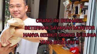 Video HEBAT ! Orang Indonesia ini BERHASIL Breeding SAVANAH MONITOR, Hanya Sedikit di Dunia yang bisa lohh MP3, 3GP, MP4, WEBM, AVI, FLV Februari 2019