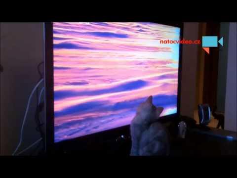 Naše kočička miluje dokumentární filmy