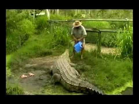 這名男子把眼前的「巨鱷當馬騎」,結果瞬間一個轉身…幸好被『手上的這一個東西』救了他一命!