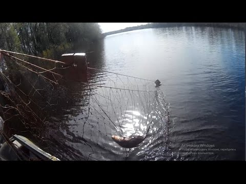 браконьеры на рыбалке видео бесплатно