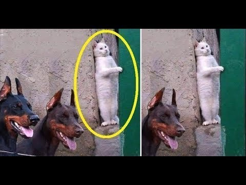 Funny animals - Cute Cats and Kittens Doing Funny Things 2018 #8 - Funny Cat compilation