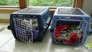 Cats&Carriers: Friends not Foes