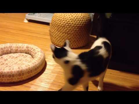140724 くうたとロックン-2 (видео)