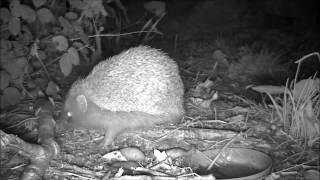 Wildlife Trail Camera - 5.10.2016