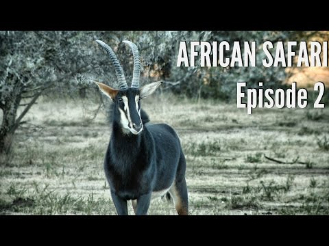Kudu, Blesbok, and Record Book Grey Duiker Hunting -