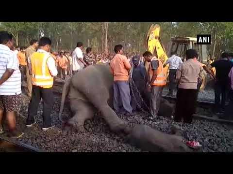 العرب اليوم - شاهد: قطار اصطدم بقطيع من الحيوانات