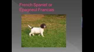 Dog breed name cross reference part 4 - D,E,F