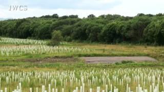 Bothwell Park Land Regeneration Site