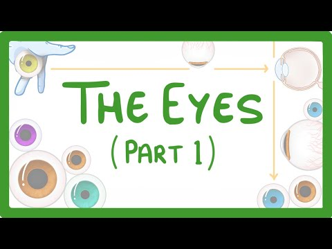 GCSE Biology - How the Eye Works (Part 1) - Structure of the Eye & Iris Reflex  #71