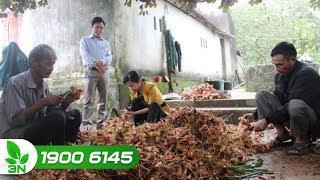 Nông nghiệp | Hơn 50% hợp tác xã nông nghiệp trên cả nước hoạt động yếu kém