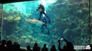 Dr.  Ellen Prager Underwater Book Reading at The Florida Aquarium