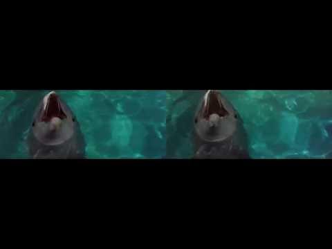 jaws 3d 1983 bluray    Clip