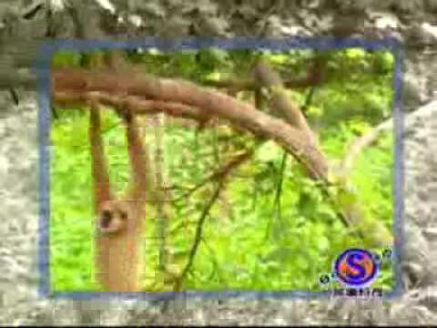 Macaco Chato e Engraçado: O Amigo de TODAS AS HORAS