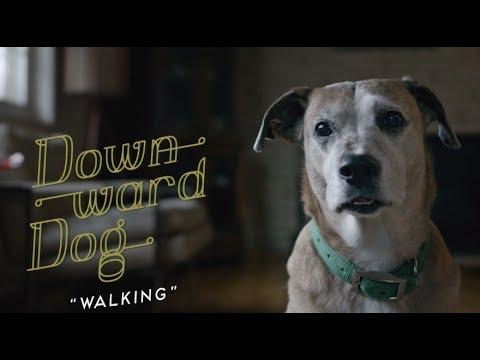 Downward Dog- Cute dog