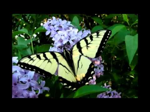 James Blunt - Butterfly lyrics