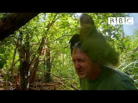 Shagged by a rare parrot - Last Chance To See - BBC Two