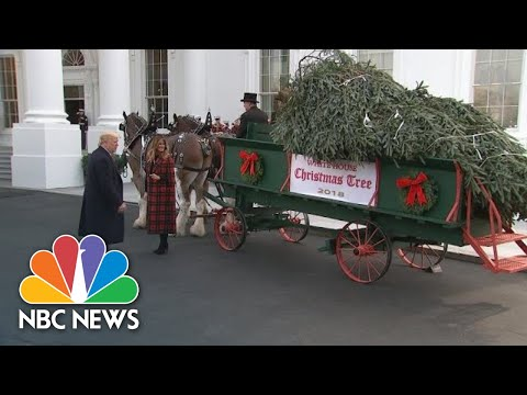 President Donald Trumps Welcome White House Christmas Tree | NBC News