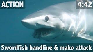 Nonton Giant Shark Attacks Swordfish  Film Subtitle Indonesia Streaming Movie Download