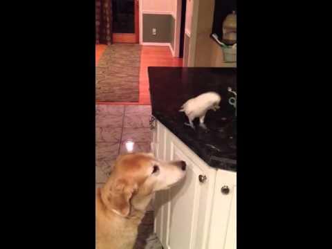 Un pappagallo e un cane amici per la pelle