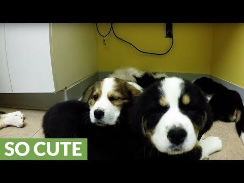 i-cuccioli-e-la-loro-prima-visita-dal-veterinario