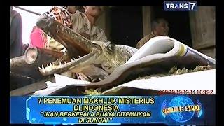 Video On The Spot - 7 Penemuan Makhluk Misterius di Indonesia MP3, 3GP, MP4, WEBM, AVI, FLV Desember 2018