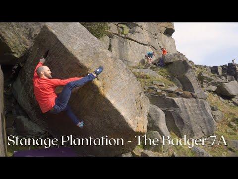 Stanage Plantation - Badger LH 7A