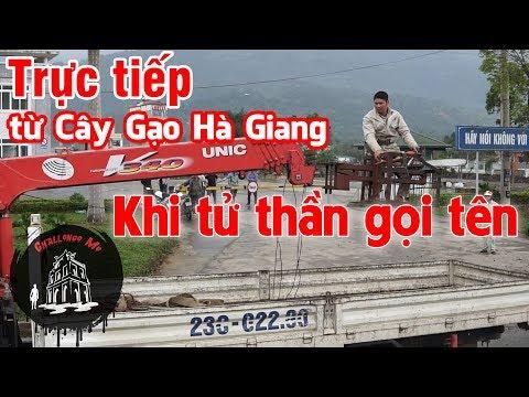Đang cưa cây Gạo gây tai nạn ở Hà Giang - Thời lượng: 14 phút.