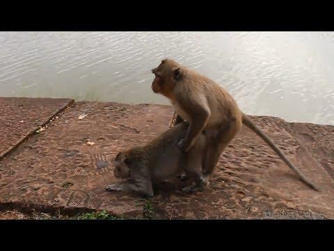 Sweat Couple Monkey Sleeping Inside Natural Room Daily Monkeys Man #256