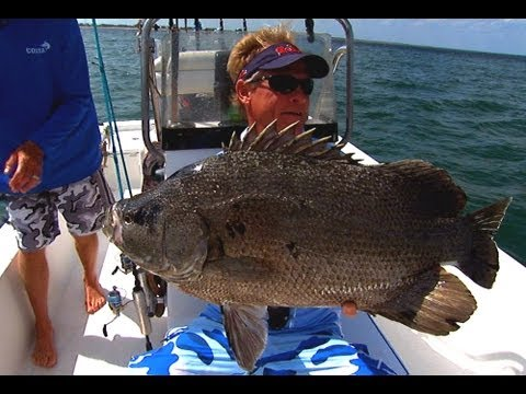 Triple Tales (NEW EPISODE) - 10 lb TRIPLETAIL fishing in St. Augustine