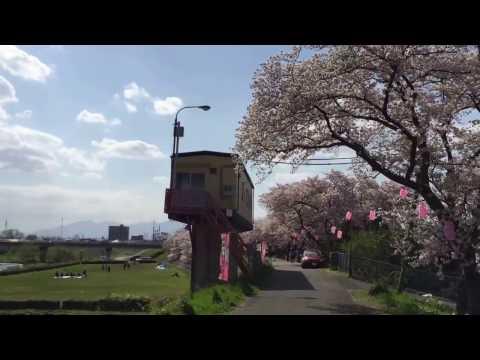 Yokkaichi Mie Ken Sakura 四日市 三重県 日本 I Japão a terra do sol nascente