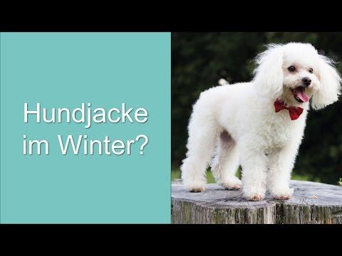 Hundejacke für den Winter?