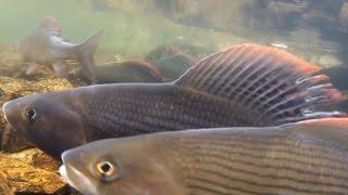 Сплав по Сухому питу - рыбалка и охота 2008 год