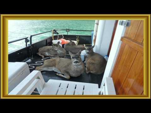 這家人出海遊玩時發現「遠方有4隻不屬於大海的生物」在求救,接著展開的救援讓大家都感動爆了!