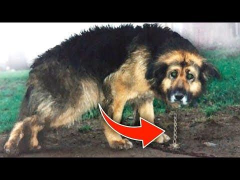 العرب اليوم - شاهد: إطلاق سراح كلب عقب إزالة السلاسل