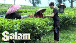Video Harris J 'Good Life' Menghibur Pekerja Kebun Teh [Harris J 'Salam'] [9 Jun 2016] MP3, 3GP, MP4, WEBM, AVI, FLV April 2019
