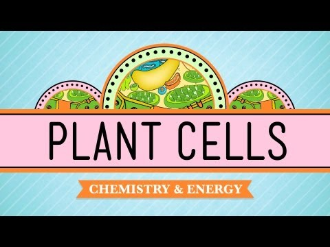 Cell - Hank describes why plants are so freaking amazing - discussing their evolution, and how their cells are both similar to & different from animal cells. Like C...